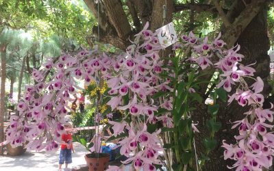 Nearly 400 works competed at the National Orchid Contest – 2019